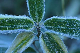 吹きすさぶ木枯らしは「オーディン」の季節の訪れ。七十二候「地始凍(ちはじめてこおる)」