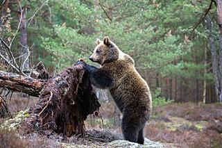 第六十二候「熊蟄穴(くまあなにこもる)」厳しい季節のはじまりをつげています