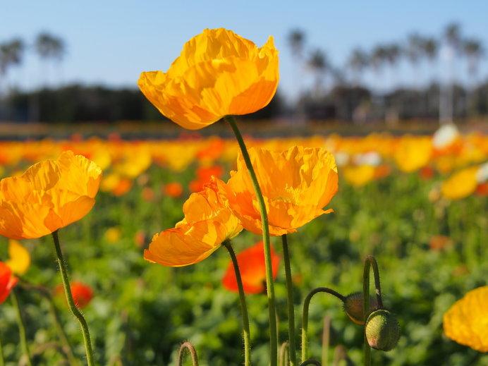 早春の花を観に行こう♪関東近郊スポット〈レジャー特集|2019〉