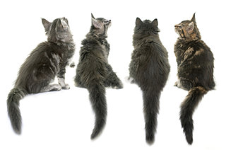 千変万化の尻尾のかたちはネコと人との絆の証。2月22日「ネコの日」