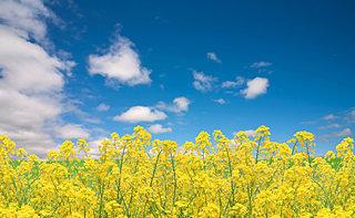 春が来た!九州の〈菜の花観賞スポット〉を厳選しました!