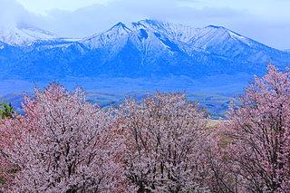 GWの後も桜を楽しもう!! 5月のお花見は道東・道北で