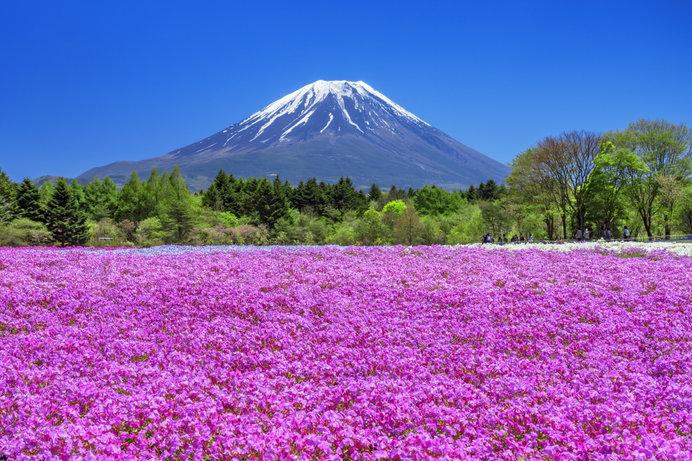 桜のあとは芝桜、ネモフィラ、花桃、つつじ♪GWに逢いに行きたい!関東甲信の絶景フラワースポット