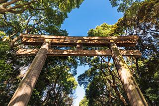 人の手で作られた「鎮守の森」は、2020年に鎮座100年を迎える明治神宮に