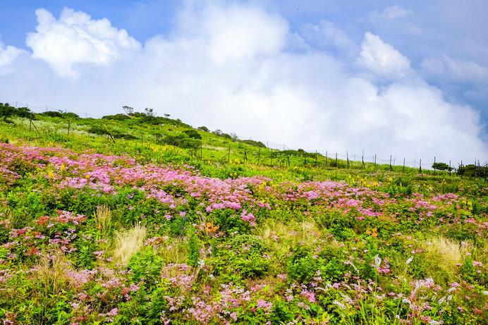 梅雨の晴れ間に登りたい♪初心者にもやさしい近畿の山は?
