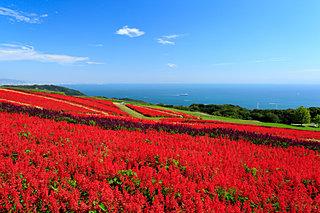 大阪近郊の「秋の花観賞スポット」へ!