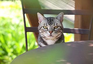 春の日差しには猫が似合う。猫の座り方、呼び名いろいろ