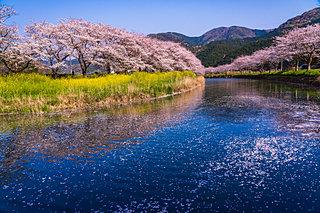 2020年の桜に逢いたい♪ 東海地方のさくら名所4選