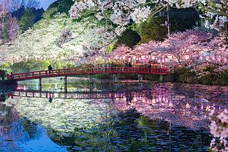 2020年の桜に逢いたい♪ 南関東のさくら名所4選