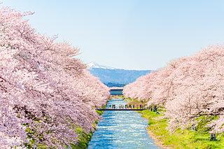 2020年の桜に逢いたい♪ 北陸のさくら名所4選