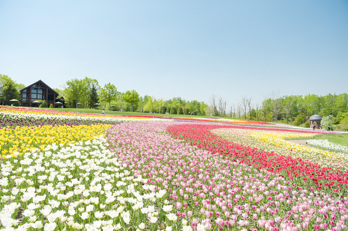 春の花を探しに♪全国のお花スポット4選