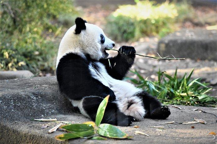 休園中もおうちでつながろう♪動物園の配信動画〜南関東編〜