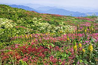 山頂の絶景を楽しもう♪日帰りで登れる夏の山〜関西編〜