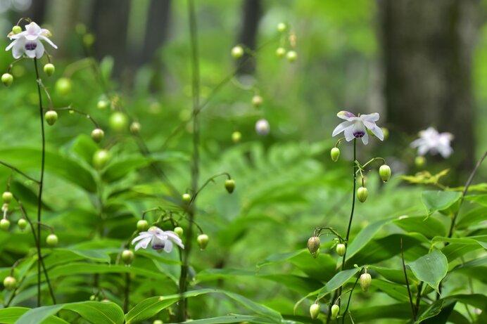 日帰りで登れる夏の山〜関東編〜涼やかな絶景を楽しもう