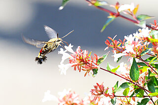 空飛ぶエビフライ!?秋の日差しの中、キラめき翔ぶ不思議生物の正体は?