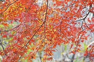 色づく山々のコラボレーション!今年の紅葉の傾向は?