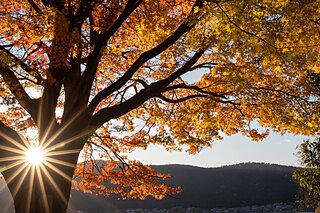 時短料理で秋の夜長を思いっきり楽しもう!