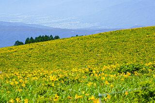 車で登れる夏山〜関東甲信・北陸編〜ひんやりした山で絶景に会いたい