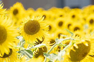 二十四節気は「大暑」を迎えます。暑さは本番、身体を労り健やかな夏へ