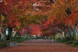 栃木・群馬・茨城の紅葉が輝く!ライトアップも美しい紅葉名所【北関東エリア】