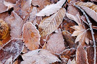 「霜降」季節が変わった? そう感じた朝はきっと初霜が降りています
